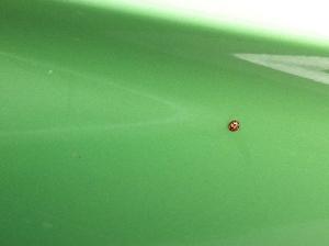 On my car, a ladybird ... hello Lady!